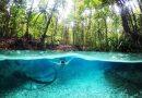 Con sông màu xanh ngọc lam tự nhiên và thiên nhiên ở Indonesia